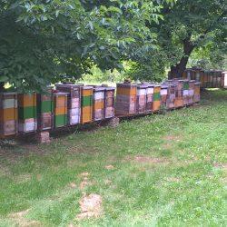 méhek2
